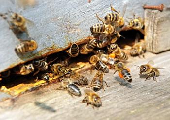 Самолет Благовещенск-Москва летел с пчелами на борту. Фото: www.dagpravda.ru