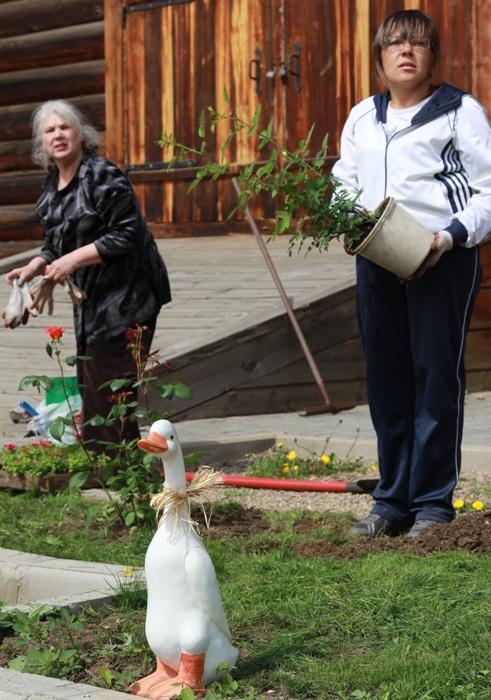 Первый день «Фестиваля цветников» в Иркутске. Фото: Нина Апёнова/Великая Эпоха (The Epoch Times)