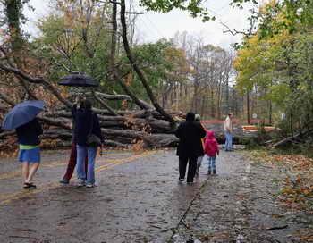 Шквалистый ветер, бушевавший в Москве вчера во второй половине дня и ночью, повалил около 60 деревьев. Фото: Bruce Bennett/Getty Images