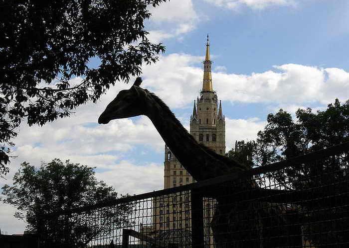 Московский зоопарк. Фото: Dmitry Fedoseev/flickr.com