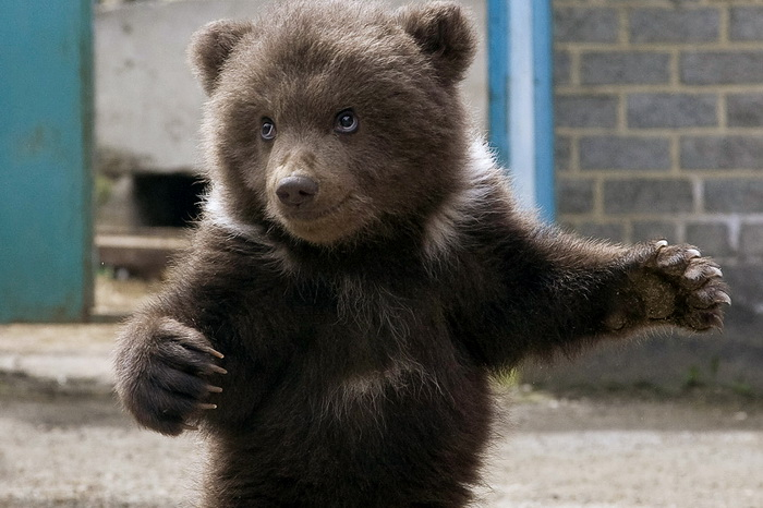 Медвежонок. Фото: DANIL SEMYONOV/AFP/Getty Images