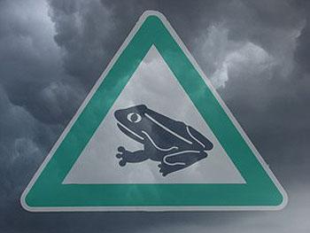 Что скрывается за феноменальными дождями из лягушек – это объяснимое наукой явление или это перст господень? Фото: Pixelquelle/stm