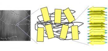 Структура шелка: желтым обозначены ключевые места в соединении структуры шелка - кристаллы (бета-листы), размер которых составляет всего лишь несколько нанометров. Прочность шёлка зависит от крепости этих соединений. Фото предоставлено Николасом Демарсом и Маркусом Джей Бюлером из Массачусетского технологического университета (МТИ)