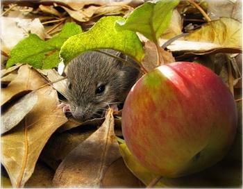 Яблоко очень полезно вместе с кожурой. И не только люди знают об этом. Фото: fed-kobets.ya.ru