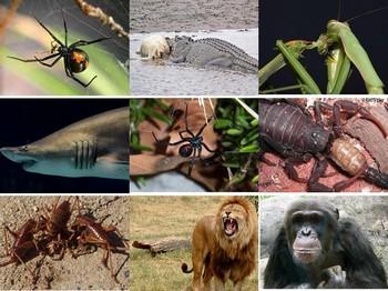 На Земле существует почти 9 млн. видов живых организмов. Фото: epochtimes.com