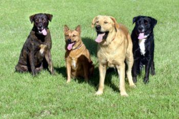 Согласно новому исследованию, собаки могут предсказать поведение человека на основе языка жестов, ситуации и из своего опыта. фото: Photos.com
