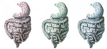 Художественное отображение трех типом  человеческого кишечника. (EMBL /П.Риендинджер)