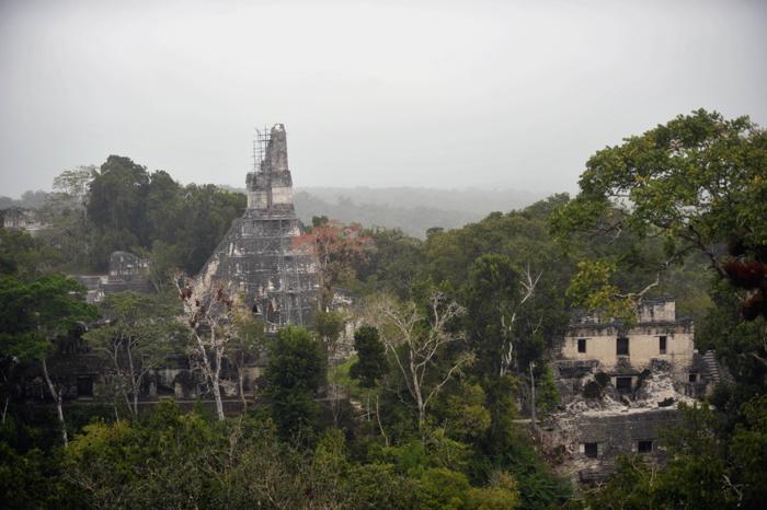 Древний город майя Тикаль. Фото: JOHAN ORDONEZ/AFP/Getty Images
