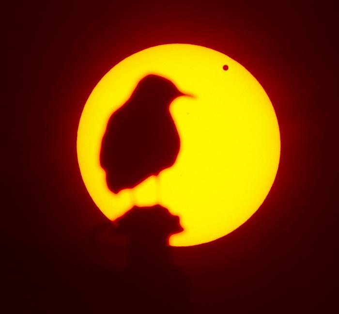 Фотографии  транзита Венеры по диску Солнца с  разных точек Земли. Швеция. Фоторепортаж. Фото: SAID TED ALJIBE, JACK GUEZ, KHATIB/AFP/GettyImages