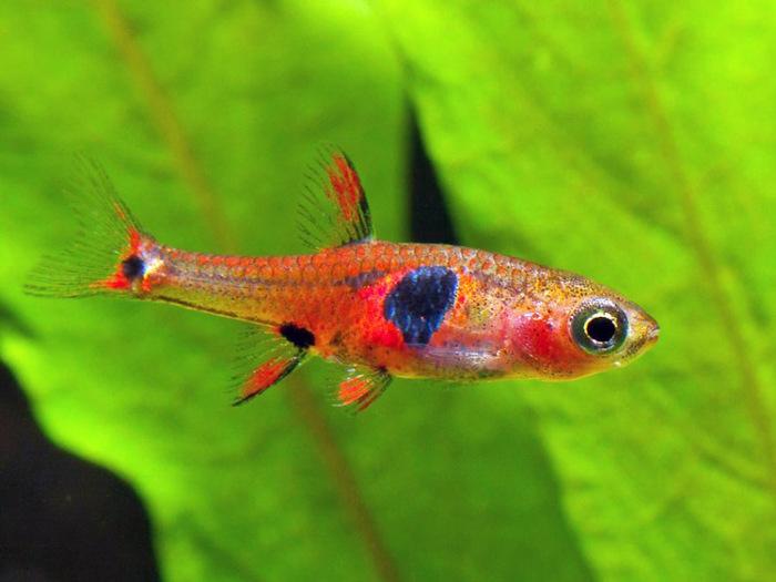 Более 120 новых видов животных и растений обнаружено в бассейне реки Меконг. Фото: wwf.org