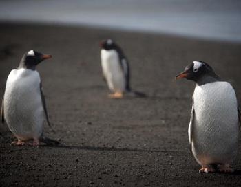 Антарктида.Фото:Getty