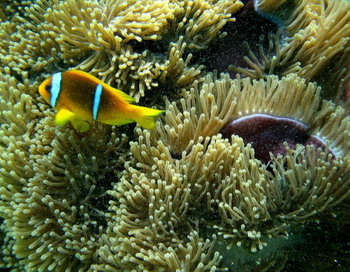Коралловые экосистемы столкнутся с самым серьезным испытанием - с беспрецедентными экологическими условиями, которые прогнозируются в 21 веке. Фото: HASSAN AMMAR/AFP/Getty Images