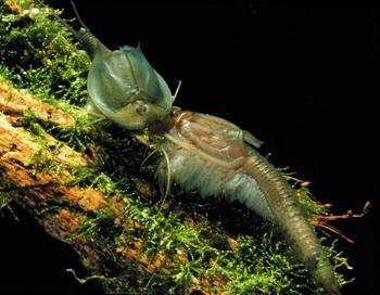 Эти маленькие существа могут показать детям необычный биологический феномен. Фото с сайта theepochtimes.com