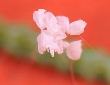 Под микроскопом можно четко увидеть лепестки и тычинки цветка удумбары. Фото с сайта theepochtimes.com