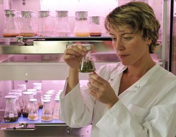 Д-р Ирина  Сметански  ищет новые  профилактические средства из растительного сырья против раковых заболеваний. Фото с сайта epochtimes.de