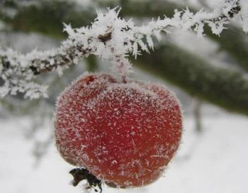 Мелкие кристаллы льда под микроскопом показывают разнообразный мир  чрезвычайно тонких структур, которые, однако, могут через физические свойства снега показать его силу. Подобным образом происходит действие китайских лекарственных средств, влияние которых проявляется только на микроскопическом уровне. Фото с сайта epochtimes.de