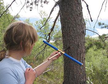 Исследователь Хелене Ловштранд Сварва в Сондале берёт пробу дерева, с помощью которой она хочет установить время жизни и смерти дерева. Фото: Terje Thun/NTNU
