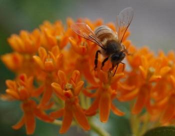 Несмотря на крохотный мозг, пчёлы способны считать, определять сходные объекты и различать симметричные и асимметричные формы. Фото: Великая Эпоха (The Epoch Times)