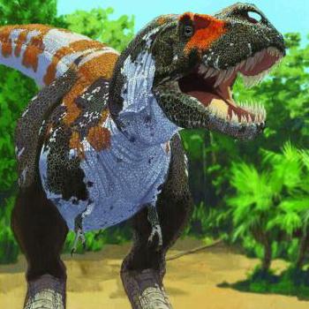 Как и другие плотоядные динозавры, включённые в исследование, тиранозавр рекс поддерживал стабильный уровень биоразнообразия до массового вымирания в конце мелового периода. Фото: AMNH/J. Brougham