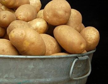 Питьевую воду будут добывать из картофеля. Фото с сайта nauka21vek.ru