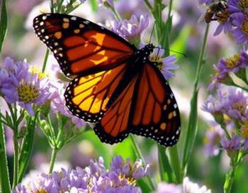 Бабочки  лечат свое потомство. Фото с сайта: sciencemagic.ru