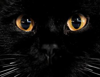 Ученые открыли тайну магического влияния кошек. Фото: NATALIA KOLESNIKOVA/AFP/Getty Images