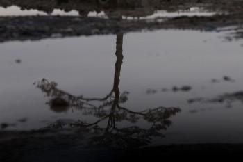 Единственная сосна, оставшаяся в городе Рикузентаката после цунами 11 марта 2011. Фото: Chris McGrath/Getty Images