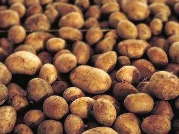 Ученые расшифровали ДНК картофеля. Фото с uwlax.edu