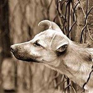 Наки - первая собака с бионическими протезами. Фото с ru.trend.az