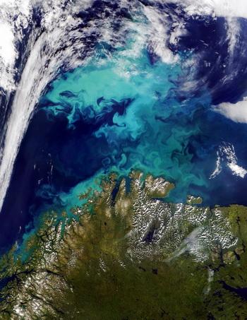 Экосистема Земли меняется, появления планктона в Атлантическом океане свидетельствует об этом. Фото: HO/AFP/Getty Images