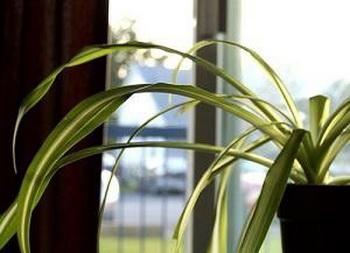 Самые лучшие очистители воздуха в доме. Фото  с сайта ba-bamail