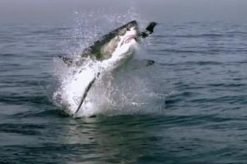 Кожа акул. Фото с сайта ba-bamile