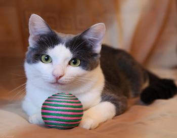 Кошки знают, как добиться своего. Фото: Эльмира/ehlmira-09.ya.ru