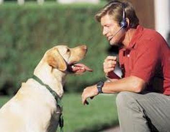 Интеллект собак теперь можно оценить объективно. Фото:ablecomm.com