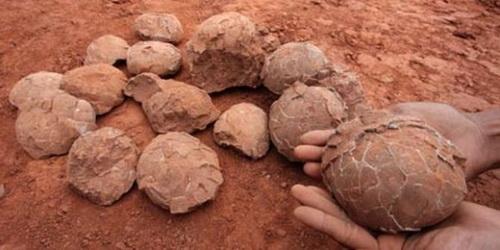 Яйца динозавров обнаружены в Испании. Фото:images.yandex.ru