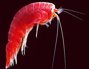 Климат древних времён можно узнать по планктону. Фото: Uwe kils/commons.wikimedia.org