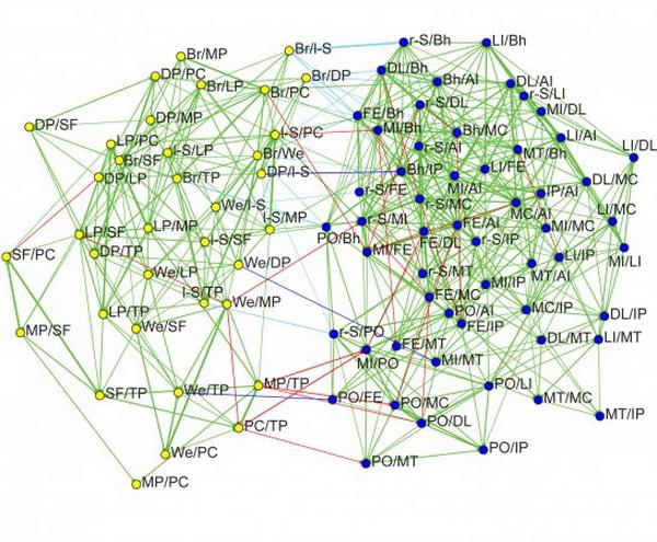 Карта левых и правых мозговых сетей использована в PlOS ONE-исследовании. Жёлтые штрихи показывают связи между доминирующими областями левого полушария, синие штрихи — связи между доминирующими областями правого полушария. Зелёные линии показывают общие соотношения у субъектов (обе связи, если они связаны линией в графе, имеют тенденцию быть более сильными или более слабыми у одних и тех же людей). Фото: University of Utah