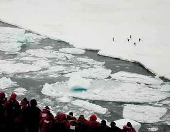 Антарктида. Фото: JOSH LANDIS/AFP/Getty Images