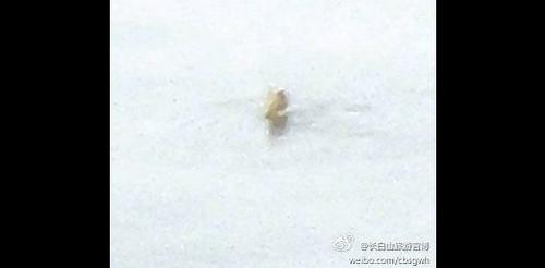 Фото существа из озера Тяньчи сделано работником станции по наблюдению за вулканической активностью. Фотография была размещена в Интернете вместе с рассказом о встрече. Фото: Weibo