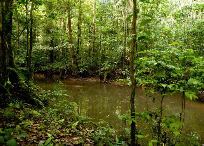 В лесах Южной Америки найдены новые виды животных. Фото: JEROME VALLETTE/AFP/Getty Images
