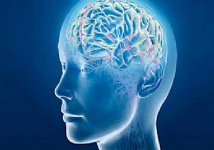 Физическая выносливость зависит от особенностей мозга. Фото: ekoayrinti.com