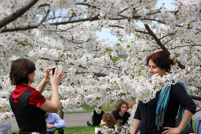 Женщины и цветущая сакура. Фото: PETRAS MALUKAS/AFP/Getty Images