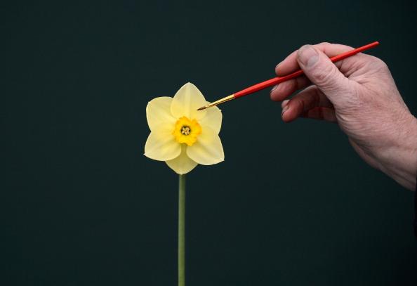 Выставка цветов Harrogate Spring Show. Фото: Christopher Furlong/Getty Images
