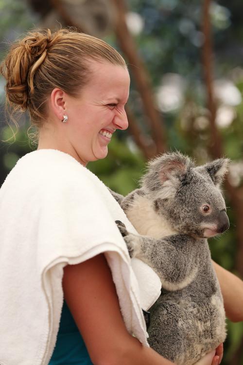 Петра Квитова до начала турнира в Брисбене посетила центр по разведению коал. Фоторепортаж. Фото: Chris Hyde/Getty Images