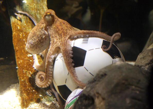 ЧМ-2010. Прогноз осьминога Пауля порадовал колумбийскую певицу Шакиру. Фото: PATRIK STOLLARZ/AFP/Getty Images