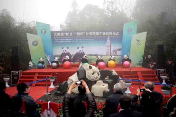 Вольер для китайских  гигантских панд Тянь-Тянь и Ян Гуан в Эдинбургском зоопарке. Фото: Jeff J Mitchell/Getty Images