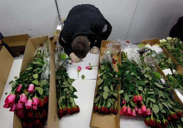 Цветы ко дню святого Валентина на таможне в аэропорту Майами. Фоторепортаж. Фото: Joe Raedle/Getty Images