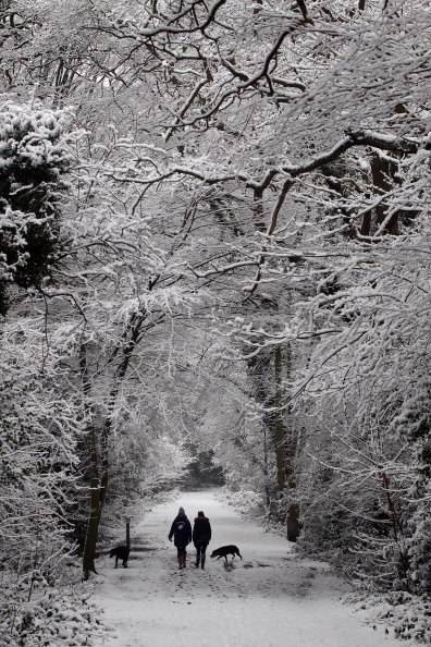 Зимний королевский пруд на Уимблдоне в Лондоне. Фоторепортаж. Фото: Peter Macdiarmid/Getty Images