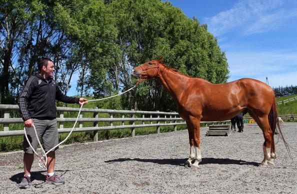 Лошади и их тренеры в Te Хоро, Новая Зеландия. Фото: Hagen Hopkins/Getty Images