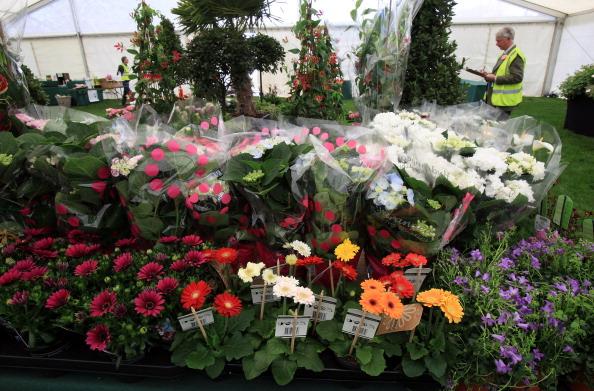 Королевская выставка цветов в Кардиффе. Фото: Matt Cardy/Getty Images